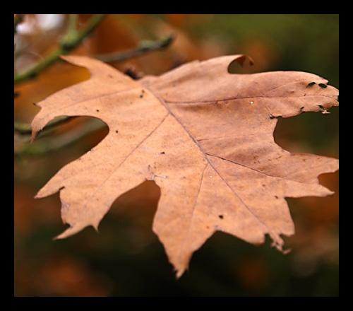 Leaf by mule