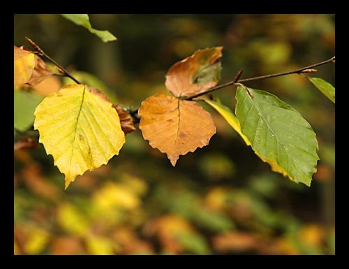 Autumn colours by mule