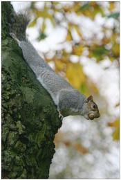 Nut Hunter