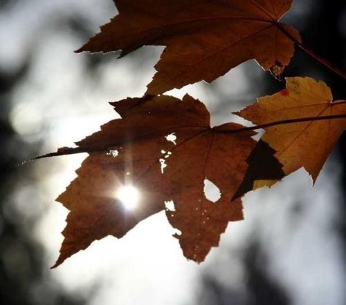 Sunshine by manicam