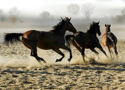 Horses (4) by missmoon