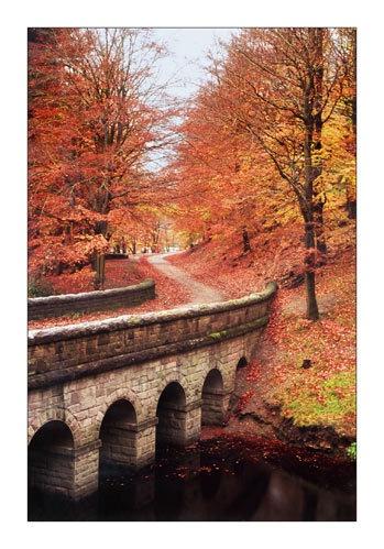 Fall by Krucza
