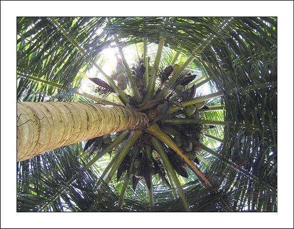 Palm Circle by fredthegnome