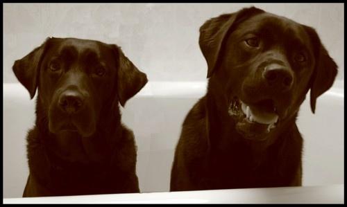 BathTime by EmilyP