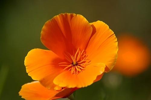 Orange Flower by clayman