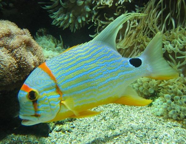 Glory Fish by GavMc
