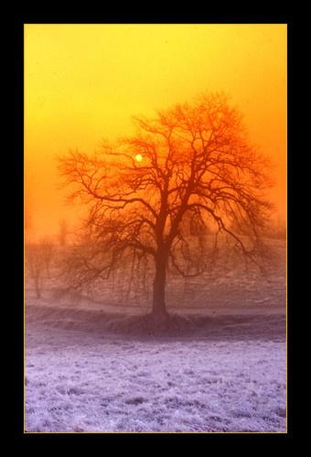 TREESUN by JOELP