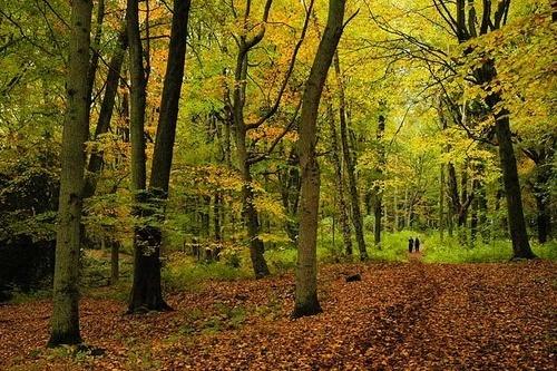Autumn Stroll by walterL