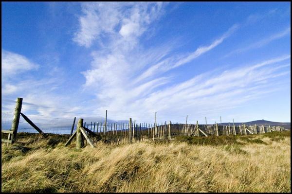 Fence by amaryllis