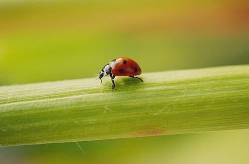 Ladybird, ladybird... by vickyh