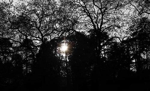 Shadowed Trees by DJackHack