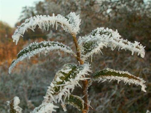 frosty sugar coating by lexc1991