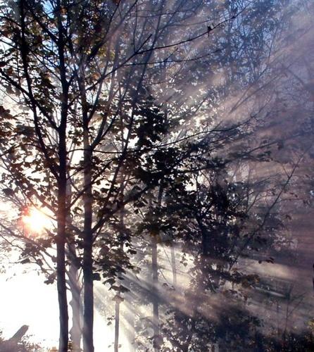 Sun break on misty morning by Michi