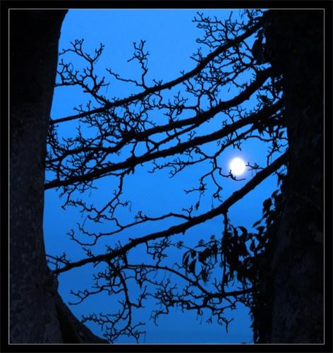 Moon Thru 2 Trees by markybhoy