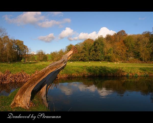 Dead Wood by strawman