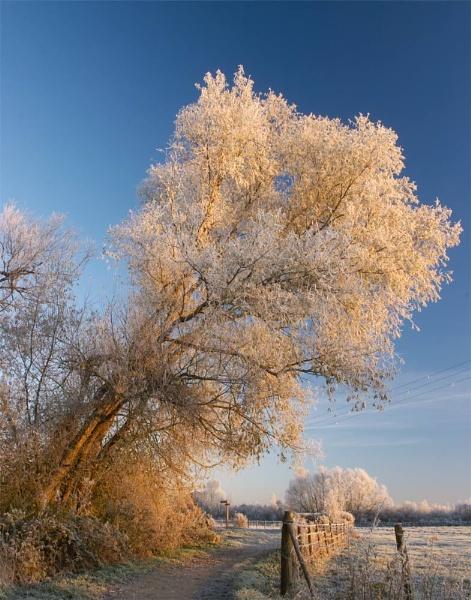 Winter Bloom by strawman