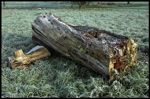 Frosted Log by chrisw