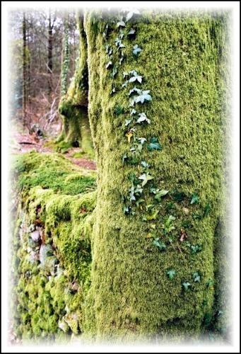 Green Carpet by DiggerDitch