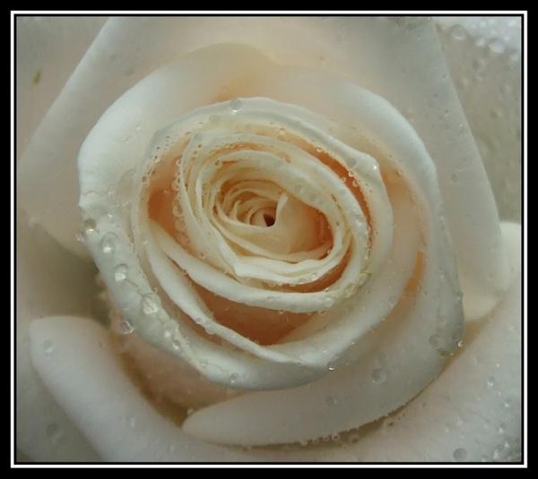 flower 114 by lizziew