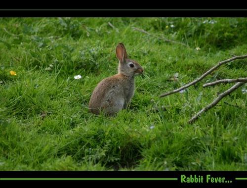 Rabbit Fever by beavis