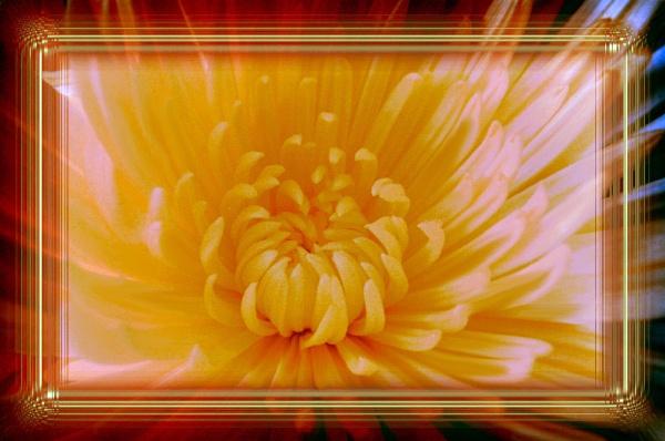 Sun Burst by Lou41