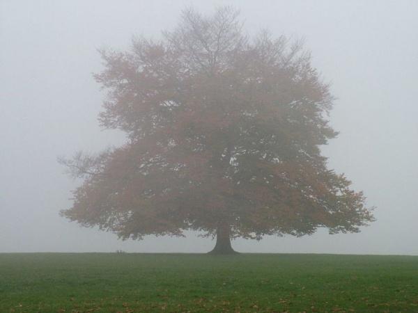 Lonesome Tree? by Jonnik