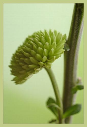 green flower by hebdens