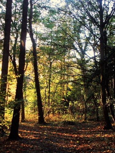 Autumn Sunshine by LauraBeans