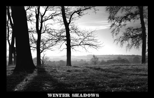 WINTER SHADOWS by marshy