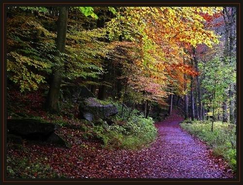Path Through Autumn by walterL