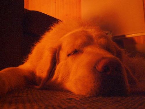 Sleeping by blizz