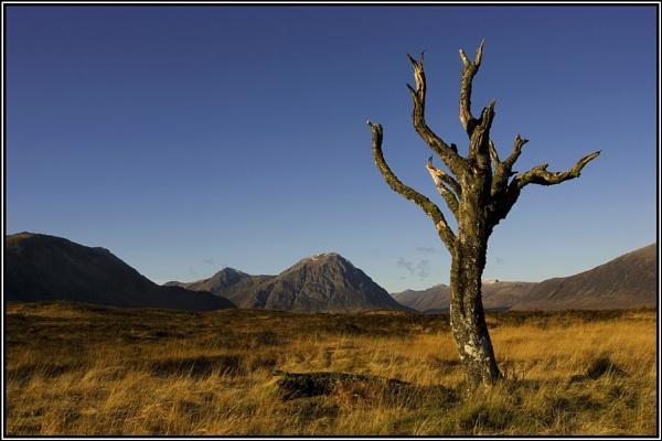 The Dead Tree ..... by johnc1711