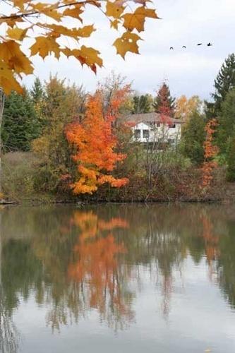 Autumn Scene by manicam