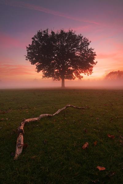 Evening Mist by itsasetamendi