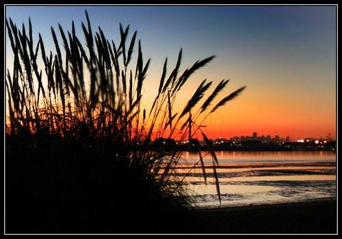 San Francisco Sunset by liparig