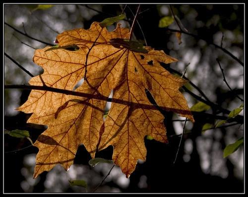 See Through Leaf by liparig