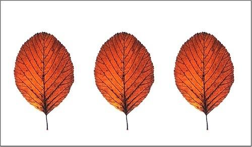 Autumn Trees by RichardB