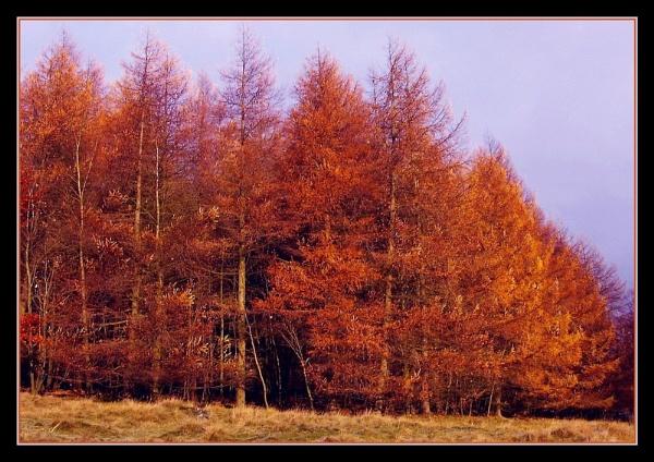autumn colours!! by sunshot
