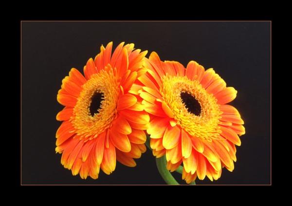 flower 115 by lizziew