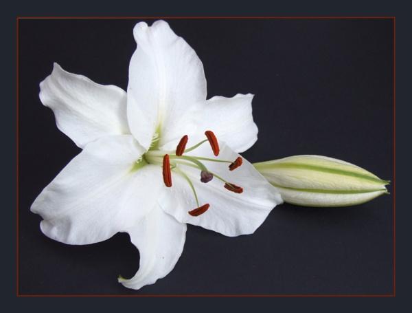 flower 116 by lizziew