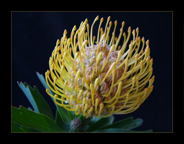 flower 117 by lizziew