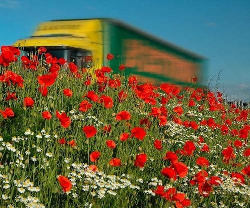 Wayside Flowers by walterL