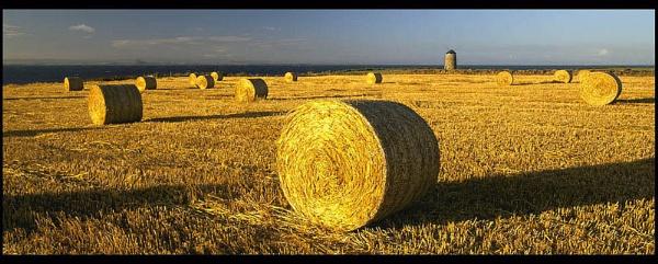 East Neuk Harvest by Camairish