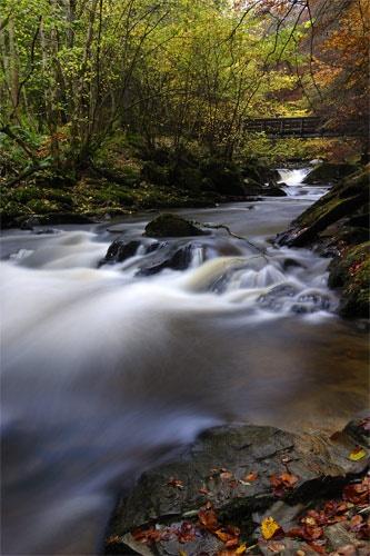 Autumn flow by Sago