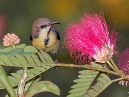 Birdy in the Garden