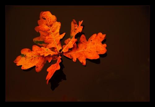 Autumn by katieb