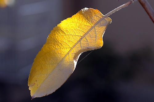 Leaf by Majnoon