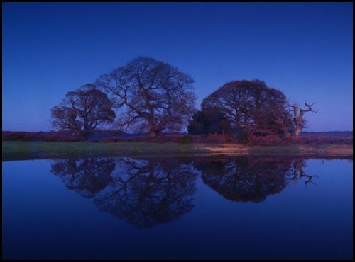 Dark Reflections by peterhorner