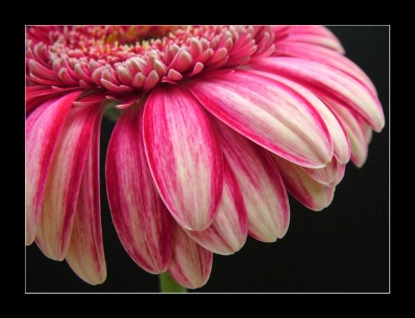 flower 118 by lizziew