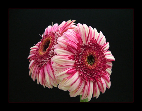 flower 119 by lizziew